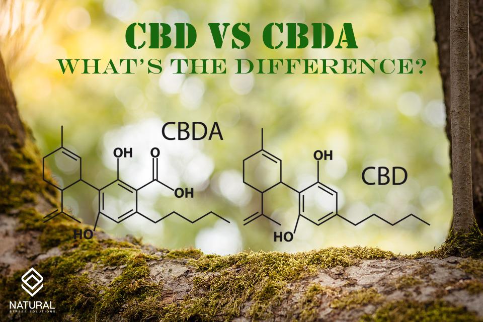 cbd-vs-cbda