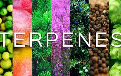 Benefits of Terpenes in Full Spectrum CBD