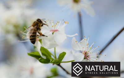 Can Hemp Help to Restore the Declining Bee Populations?