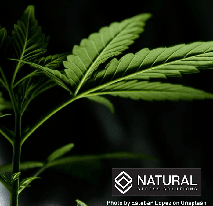 Other Cannabinoids Found in Full Spectrum CBD