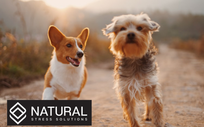 How to Dose CBD for Pets